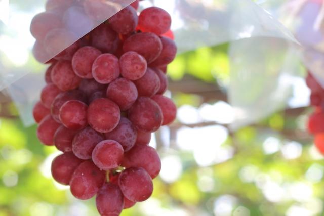 葡萄 栄養